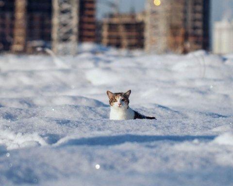 Где пойдет снег: синоптики дали свежий прогноз погоды