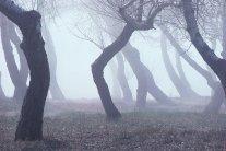 Туман, ветер и холод: каким областям не повезет с погодой