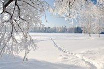 Коли в Україні знову похолодає: синоптики поділилися свіжим прогнозом погоди