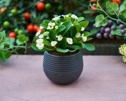 Какие растения спасут от гриппа и сухости кожи: выращивать их очень просто