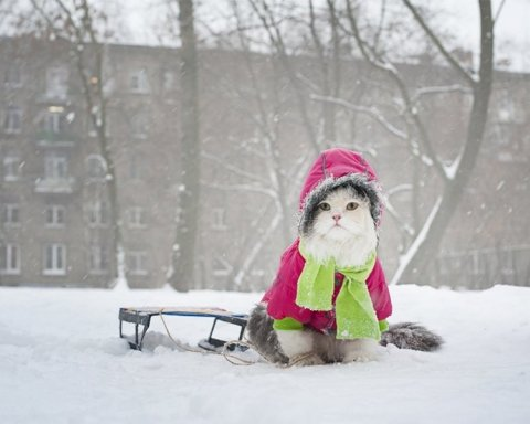 Погодные качели: синоптик дал прогноз погоды на зиму