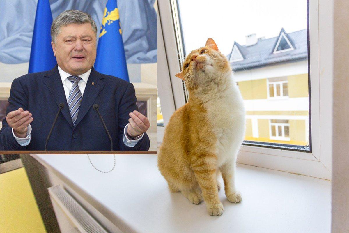 Порошенко зайнявся котиками: з нього сміються