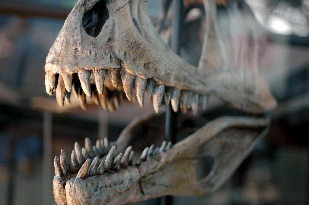 У Великобританії випадково виявили сліди динозаврів: деталі дивовижної знахідки