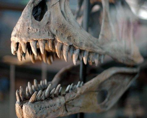 В Великобритании случайно обнаружили следы динозавров: детали удивительной находки
