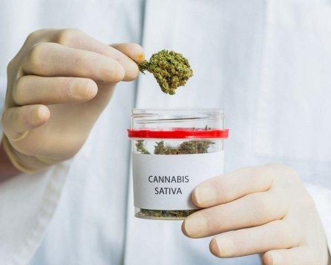 У Раді готують законопроект про легалізацію марихуани: Арахамія розповів подробиці