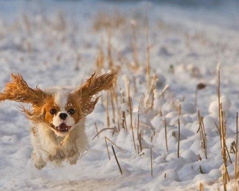 Прогноз погоди на перший день зими: синоптики розповіли, де в Україні буде сніг