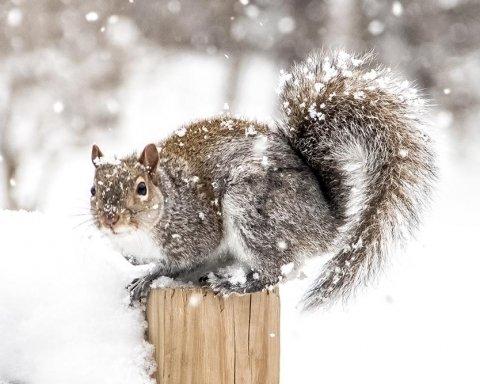 Погода на завтра: які регіони України замете снігом