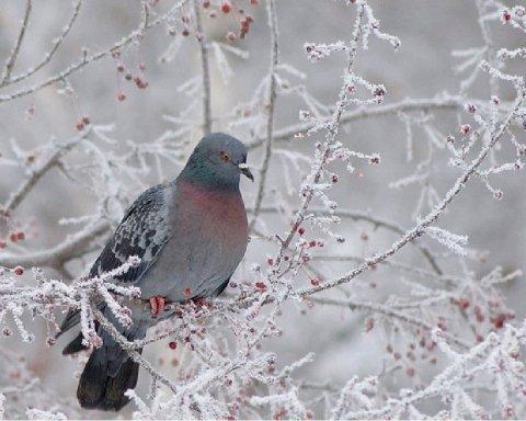Приближаются морозы: синоптик предупредила о смене погоды
