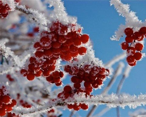 В Украине будут 25-градусные морозы: синоптик назвал дату
