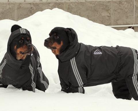 Погода в Украине: синоптики рассказали, когда вернутся сильные снегопады