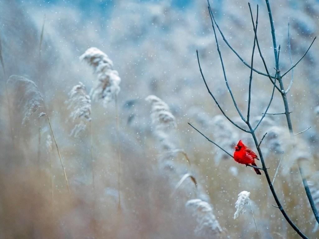 Потужний антициклон насувається на Україну: синоптик дала прогноз погоди на Стрітення