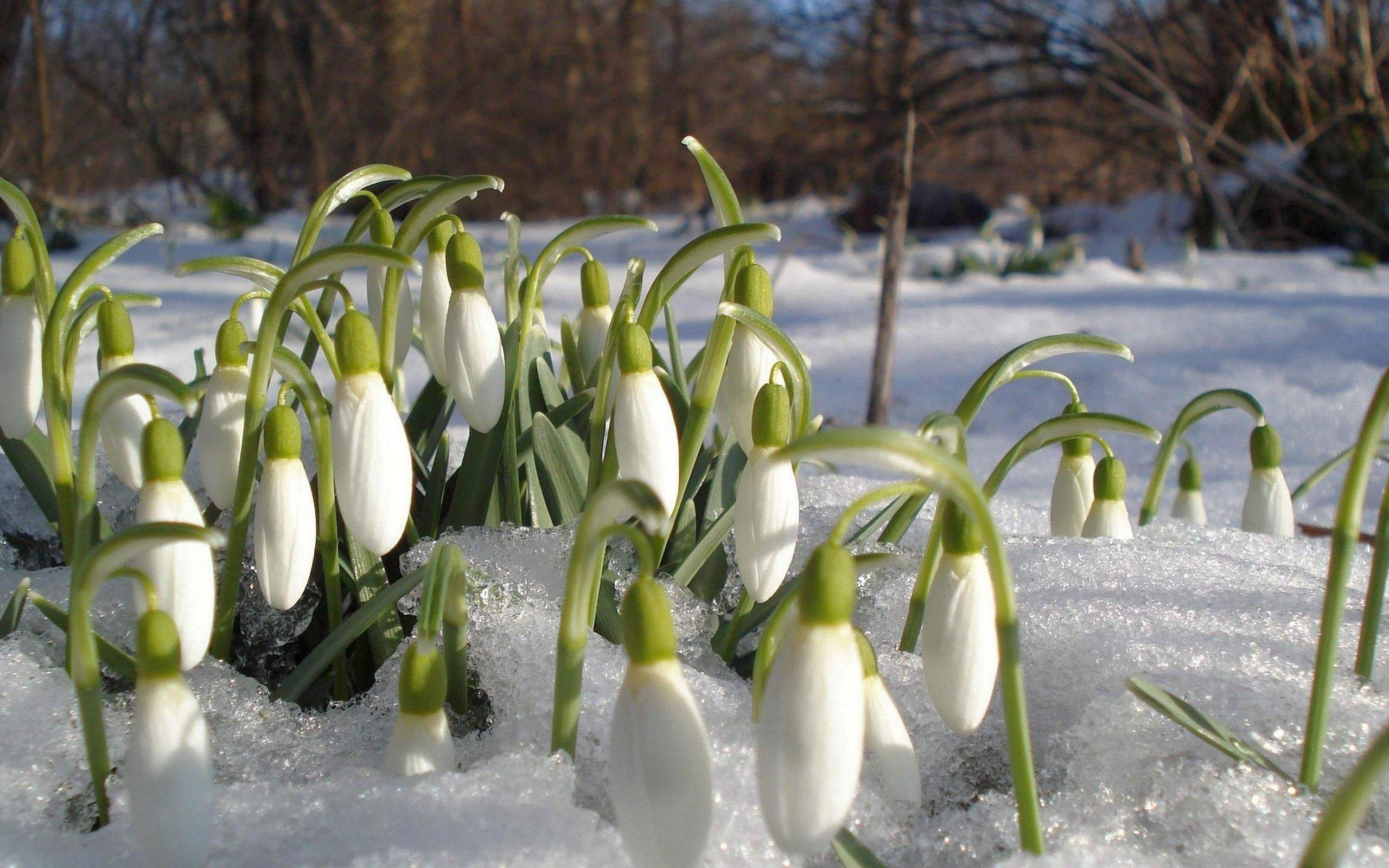 Пришла весна картинки красивые
