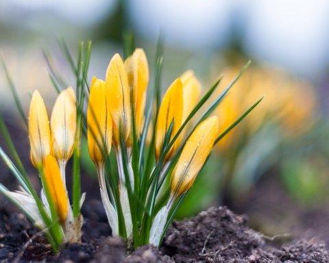 Тільки в квітні: синоптик назвав дату, коли в Україну прийде справжня весна