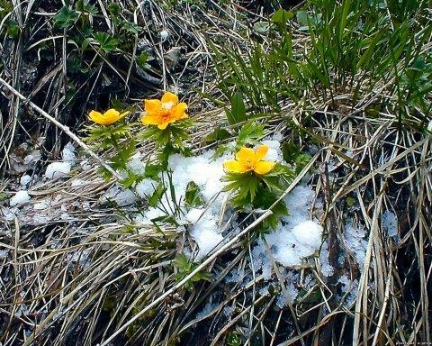15 градусов: синоптик рассказал, когда в Украину придет настоящая весна