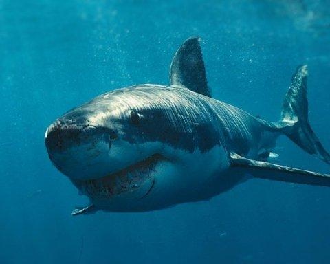 Акули допоможуть вилікувати рак: вчені зробили дивовижне відкриття