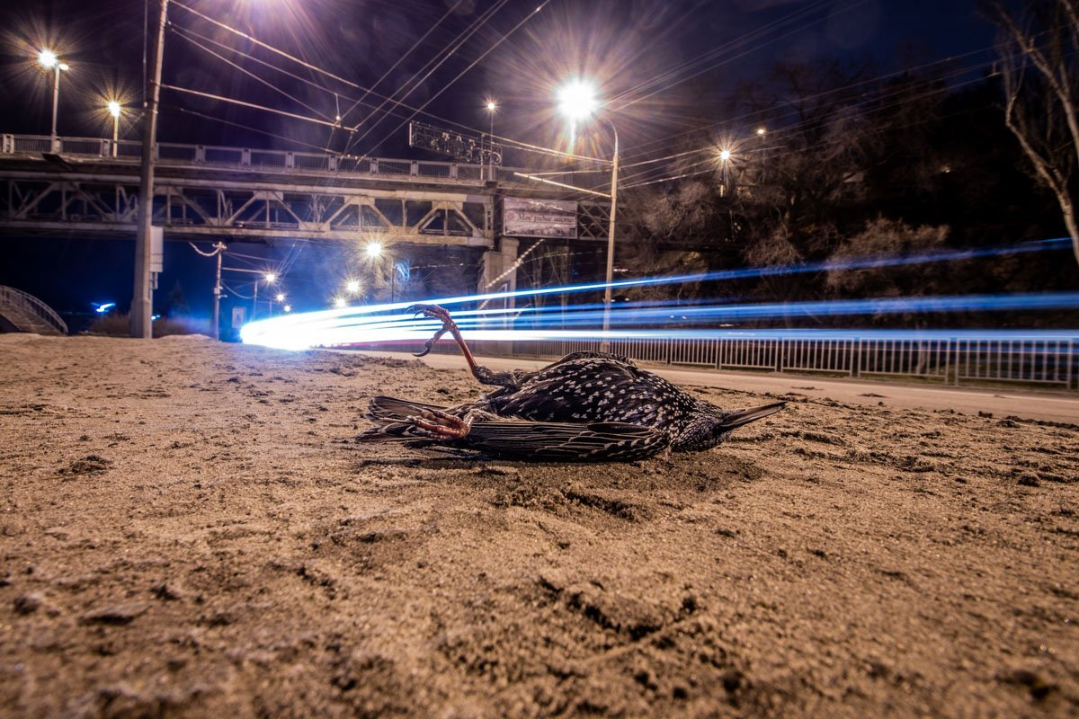 Тіла лежать на дорозі: у центрі Дніпра сталася моторошна НП
