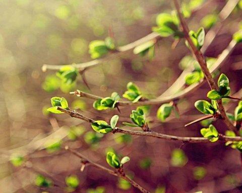 Коли прийде справжня весна: синоптик здивував прогнозом погоди для України