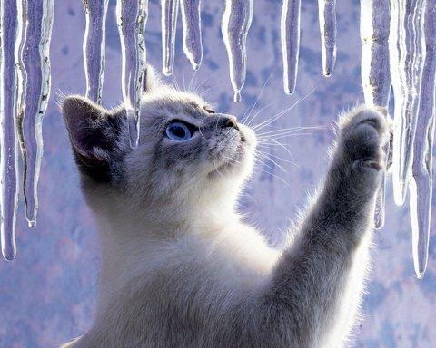Зима відміняється: синоптик дала теплий прогноз погоди на суботу