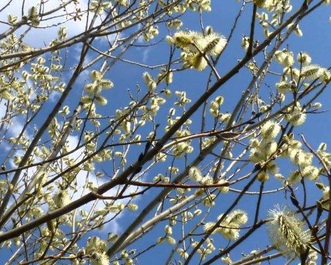 В Україну повертається справжня весна: синоптики назвали дату