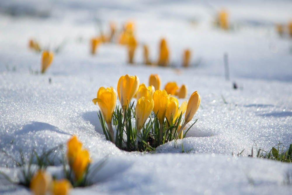 Сніг та ожеледиця: кому сьогодні не пощастить із погодою