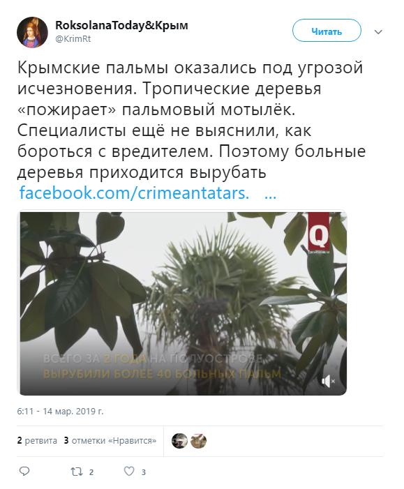 Гибнут деревья: оккупированный Крым настигла новая беда