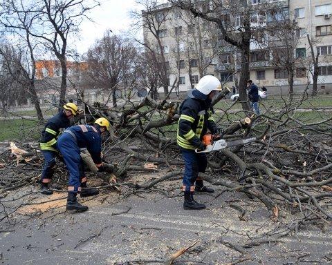 В Николаеве дерево упало на маршрутку, пострадали дети: фото и видео с места ЧП