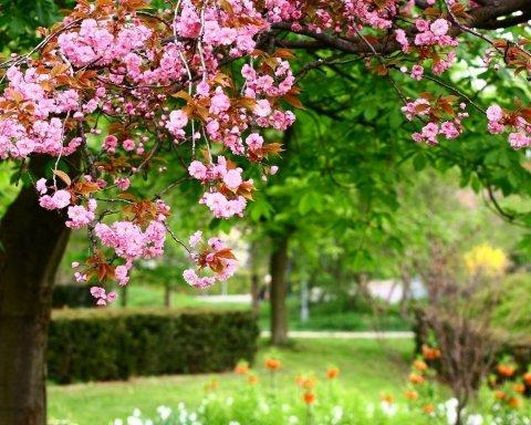 Справжня весна близько: синоптик розповіла, коли в Україні буде 20 градусів тепла