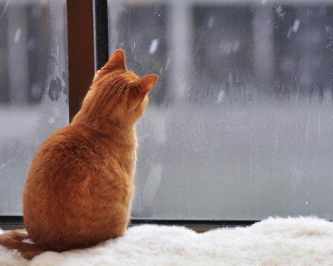Дощі та мокрий сніг: де в Україні буде погана погода