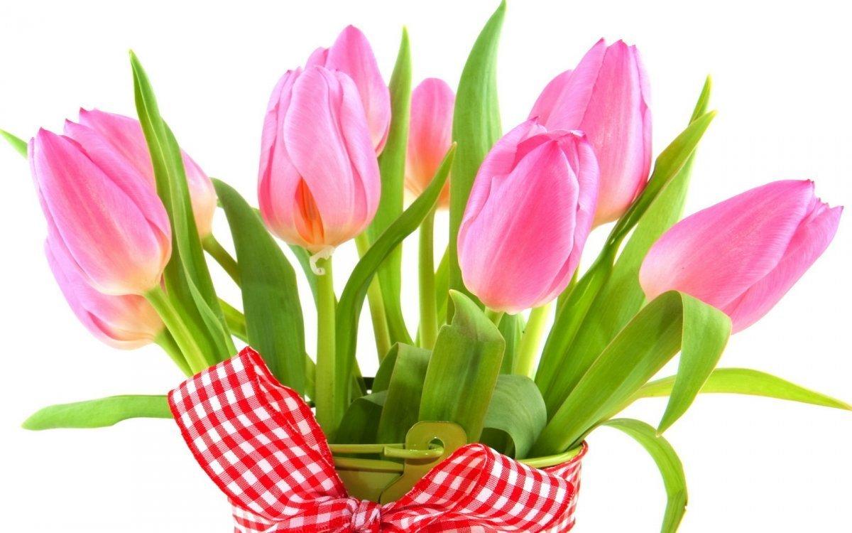 Юбилеем, картинки тюльпаны 8 марта