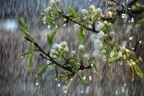 Україну заллють дощі: синоптики повідомили, кому не пощастить з погодою