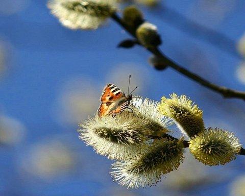 Справжня весна близько, але затримається не всюди: з'явився цікавий прогноз погоди