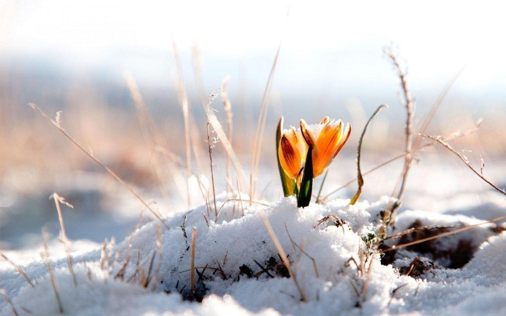 15 градусів морозу: синоптик шокував прогнозом на березень