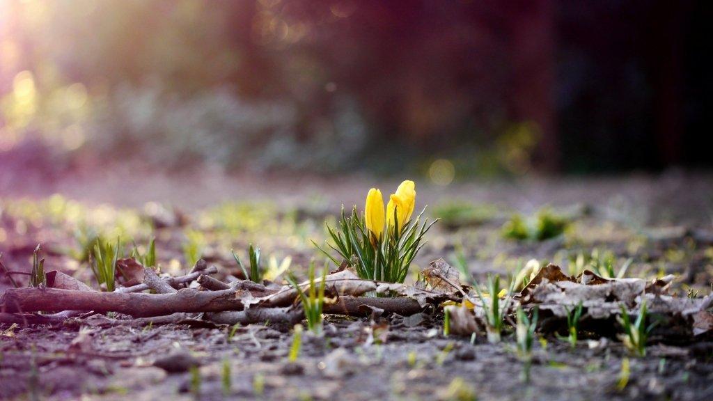 Сначала морозы и дожди: синоптик рассказал, когда в Украину придет настоящее тепло