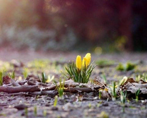 Погода 8 березня: кому в Україні пощастить найбільше