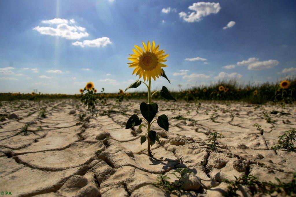 Україну накриє аномальна спека і посуха: прогноз погоди на серпень