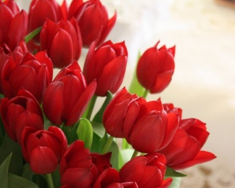 Вітання з 8 березня: красиві і жартівливі листівки та побажання