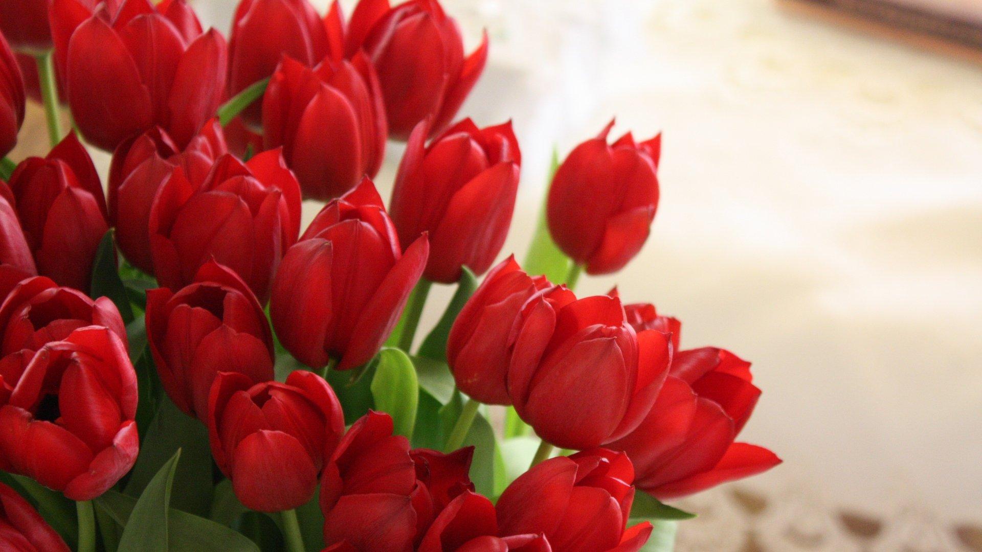 Картинки с тюльпанами в день рождения