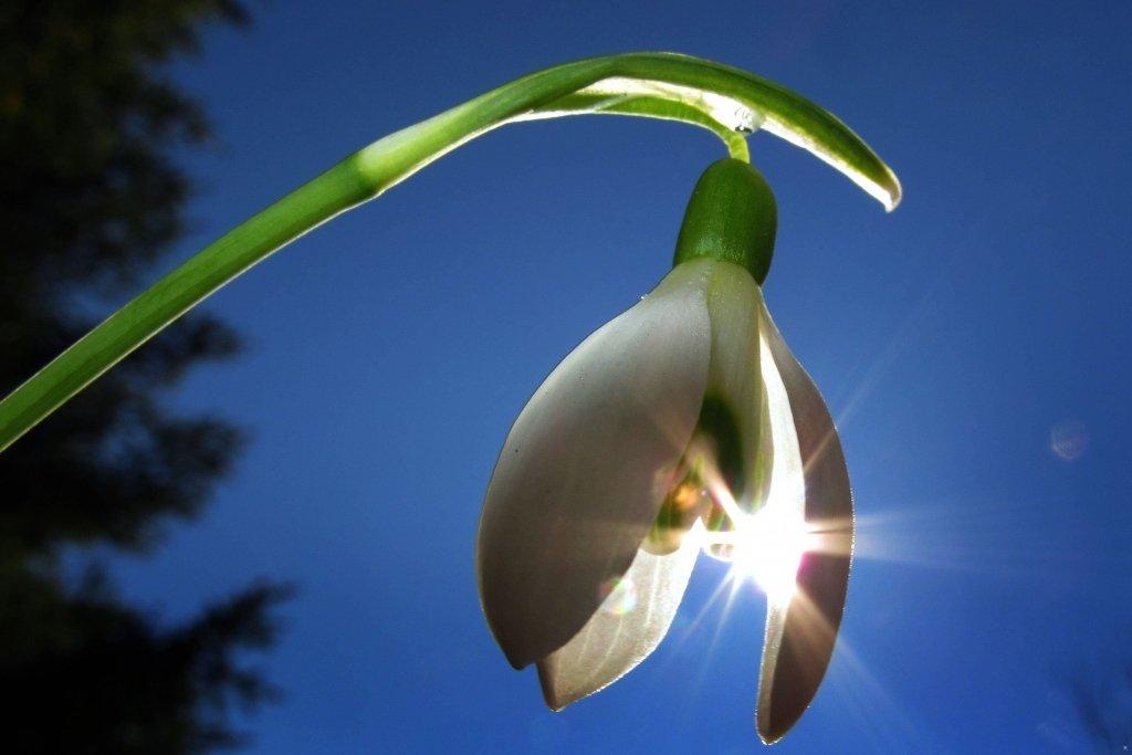 Прийде весна: синоптики дали прогноз погоди до кінця лютого в Україні