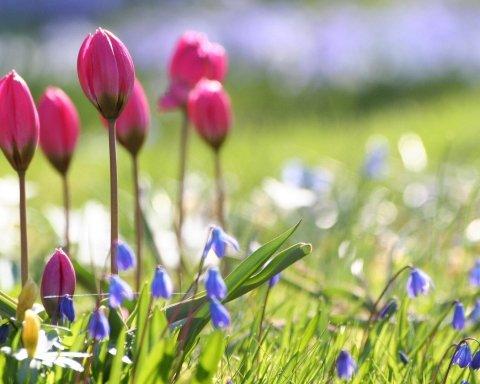 Погода приготувала українкам чудовий подарунок на 8 березня