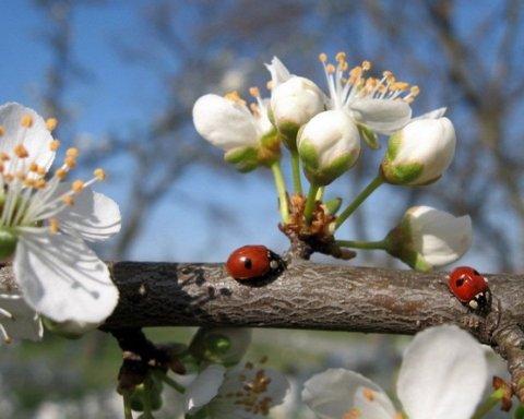 Будут дожди и холод: синоптик дал прогноз погоды на апрель