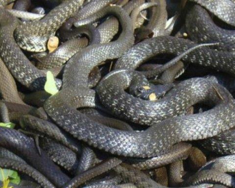 Ресторан в Днепре «атаковали» почти два десятка змей: опубликованы фото
