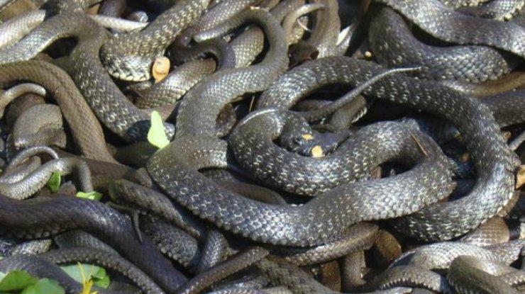 """Ресторан у Дніпрі """"атакували"""" майже два десятки змій: опубліковано фото"""