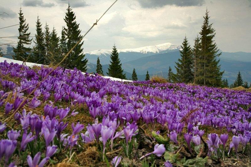 В Україну прийшла справжня весна: опубліковано яскраві фото