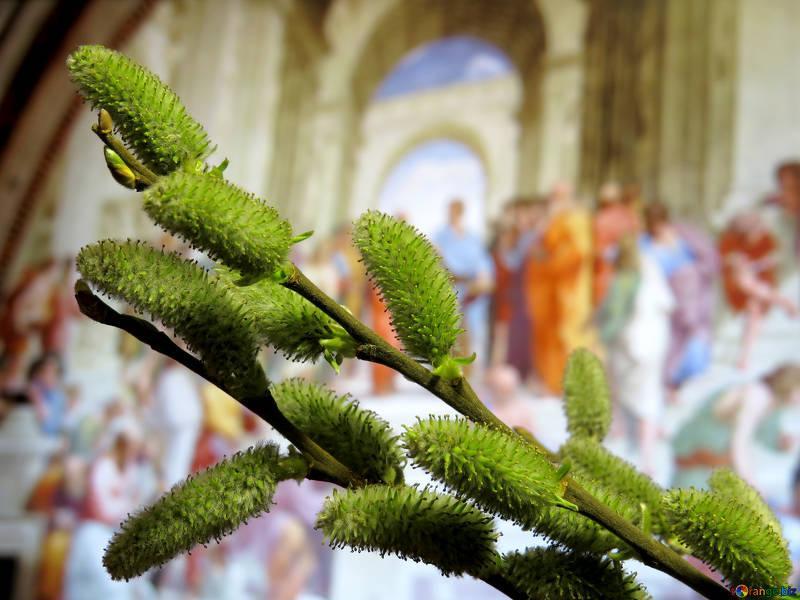Вербное воскресенье: священник дал несколько важных советов перед праздником
