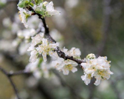 Мокрый снег и заморозки: синоптики предупредили о резком ухудшении погоды