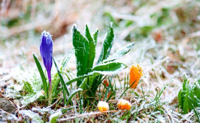 Коли в Україні почнеться справжня весна: синоптик назвала точну дату