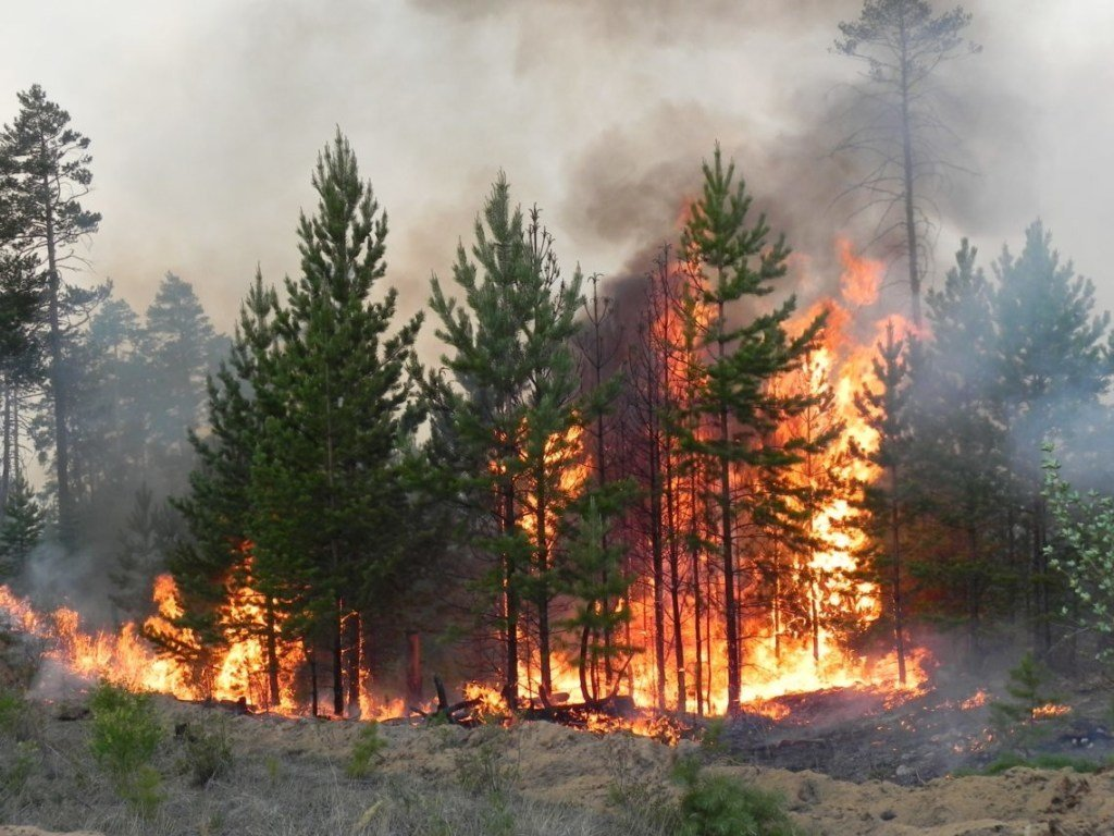 Под Житомиром вспыхнул крупный лесной пожар: опубликованы фото