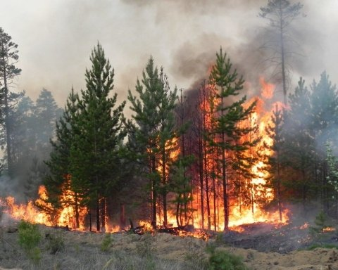 Під Житомиром спалахнула масштабна лісова пожежа: опубліковано фото