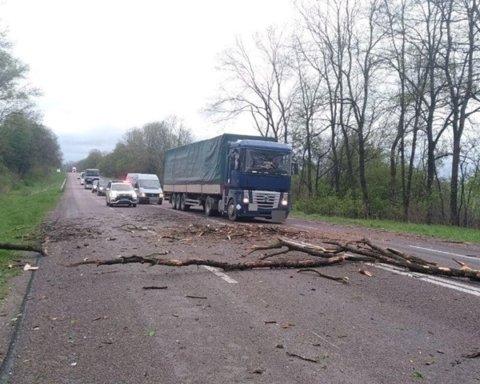 Ужасная погода: на автобусы падают деревья