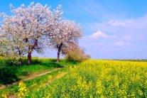 Тепло і зливи: погода 9 травня продемонструє всю свою весняну палітру